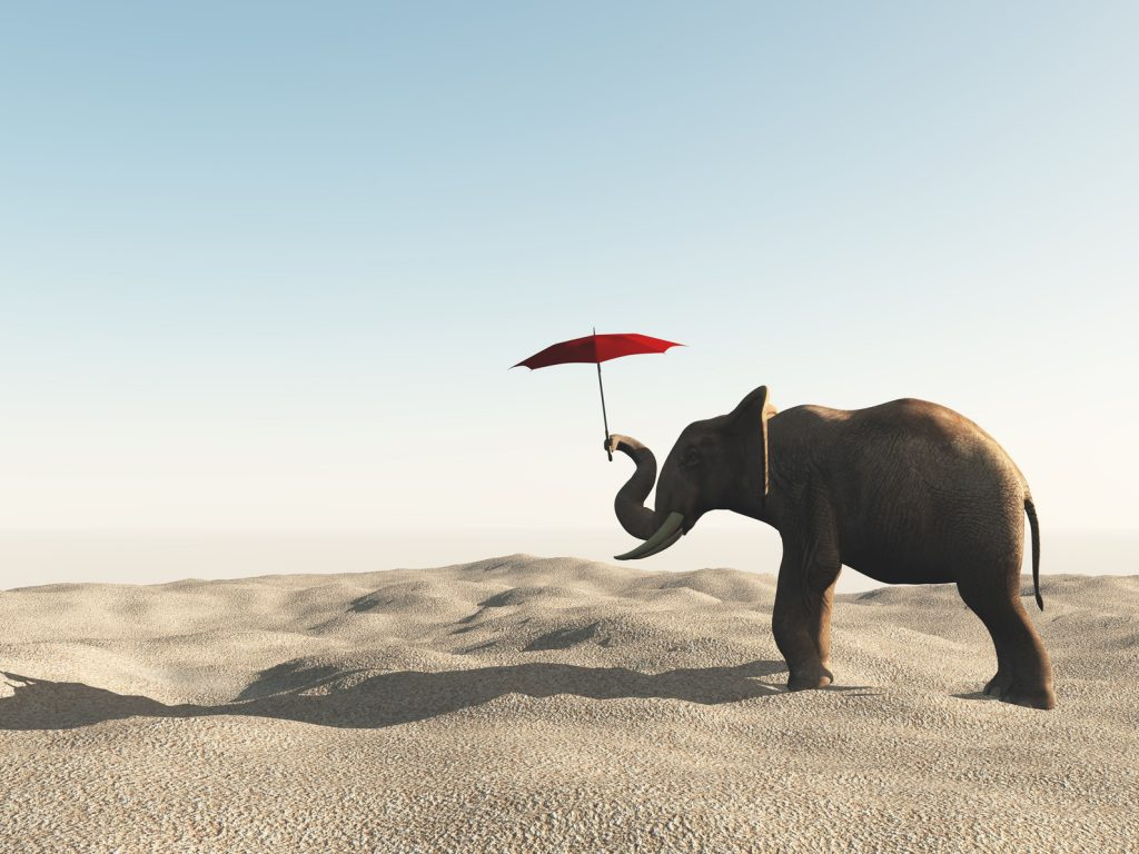 Elephant in the desert with umbrella.
